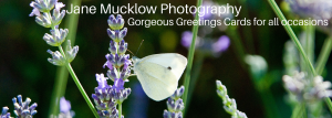 Jane Mucklow Photography header image for greetings cards