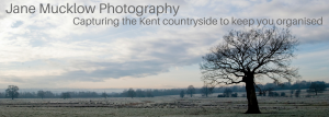 Photograph of a single tree at sunrise on a frosty morning, view across the Kent countryside, by Jane Mucklow Photography