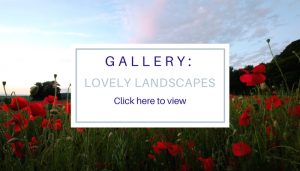 Title photo for Lovely Landscapes Gallery, photo of poppy field at sunset by Jane Mucklow Photography