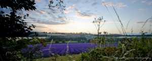 Photograph of a sunset sky over a lavender farm by Jane Mucklow Photography