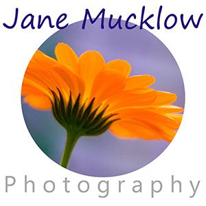 orange marigold logo for Jane Mucklow Photography