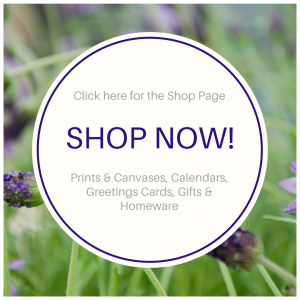 Shop page title picture, on lavender kisses photo by Jane Mucklow Photography