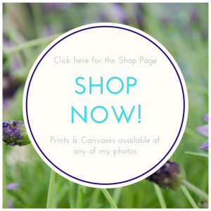 Shop prints and canvases page image