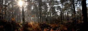 Sun shining through trees and bracken of a forest, by Jane Mucklow Photography