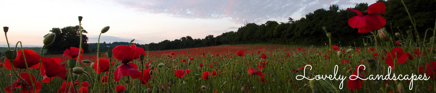 Photograph of a poppy field at sunset by Jane Mucklow, Lovely Landscapes page header image