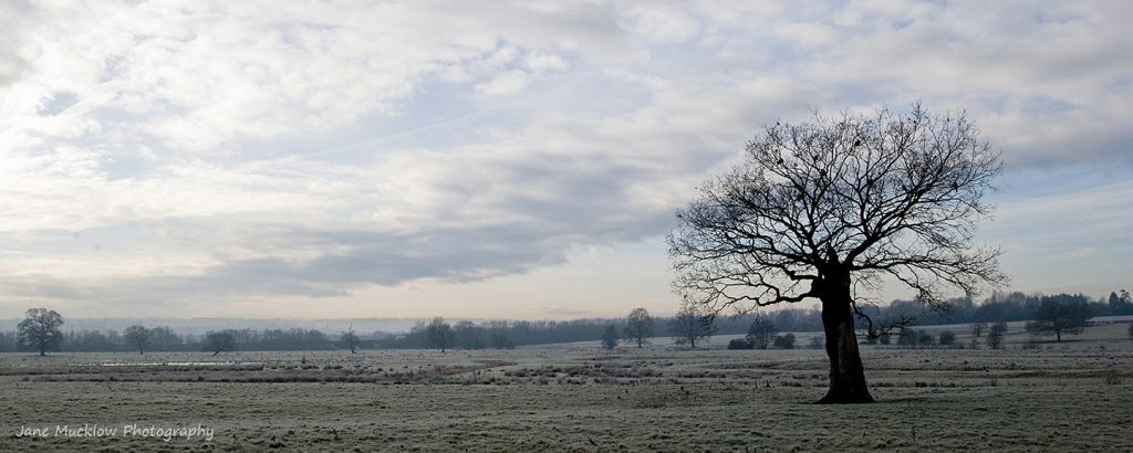 View of a tree and field on a frosty morning, photo by Jane Mucklow Photography