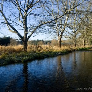 View looking up along the River Darent at Eynsford, winter trees and frost on the far side, photo by Jane Mucklow Photography