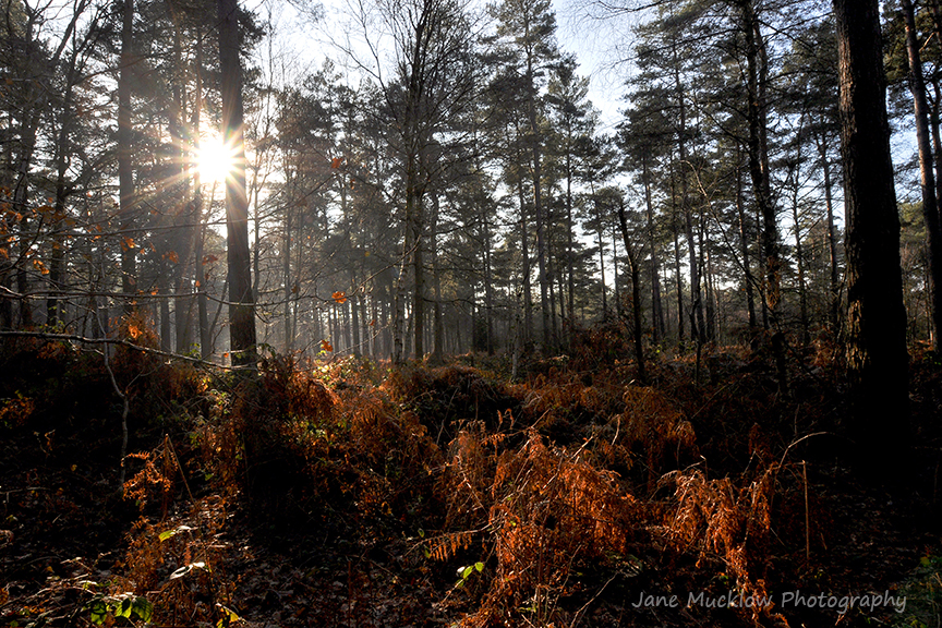 Photograph by Jane Mucklow of sunshine through Broadwater Forest, Tunbridge Wells