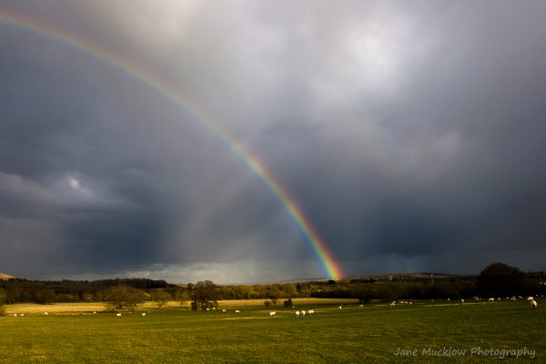 Photograph of a rainbow against dark grey clouds, landing in a sheep field by Jane Mucklow
