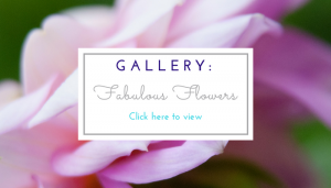 Gallery for Fabulous Flowers page image