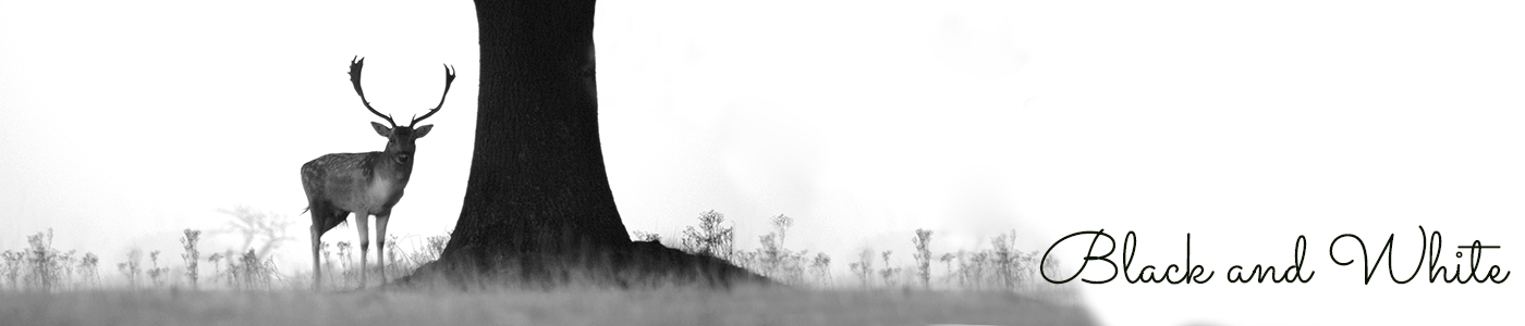 Photograph of a stag and tree by Jane Mucklow, Black and White gallery page header image