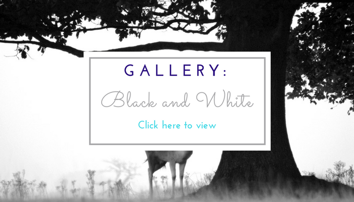 Gallery for Black and White photos page image