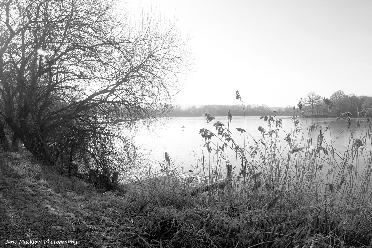 Black and white photograph of a frosty morning at Haysden Lake near Tonbridge, by Jane Mucklow