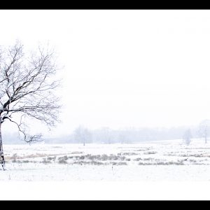 Photograph of a single tree standing in a snowy field by Jane Mucklow Photography