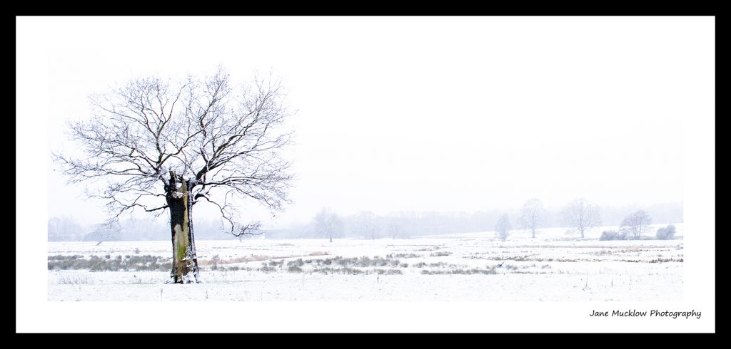 Photograph of a tree standing on it's own in a snowy landscape, by Jane Mucklow