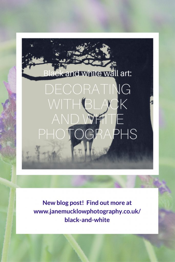 blog pin post for black and white photos by Jane Mucklow Photography
