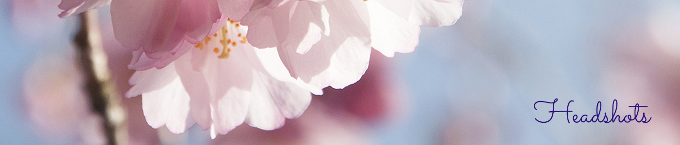 Pink cherry blossom on blue sky, headshots page header image by Jane Mucklow