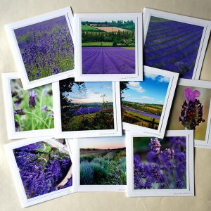 Lavender Card Collection - set of ten lavender photographs on greetings cards, by Jane Mucklow
