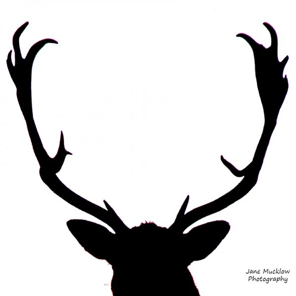 Black and white photo of a Stag's head by Jane Mucklow Photography