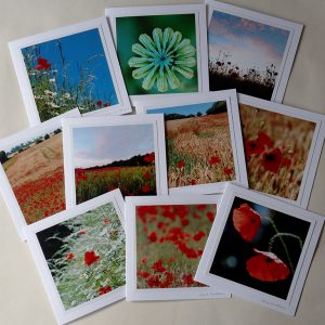 Collection of ten greetings cards featuring poppy photographs by Jane Mucklow