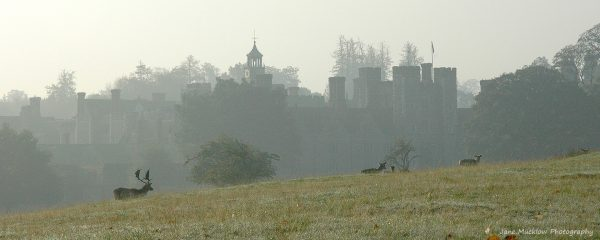 Photograph of Knole House and deer on a misty morning by Jane Mucklow