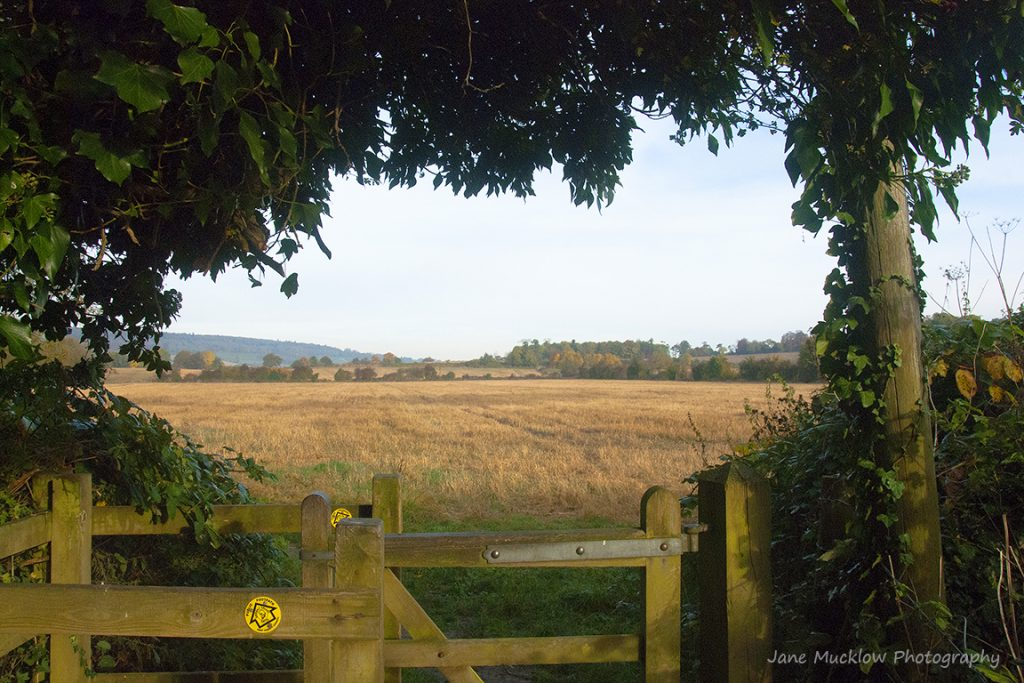 Photograph of the view towards Shoreham from Otford, across the Autumnal fields by Jane Mucklow