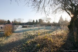 Photograph of a frosty morning sunrise over the Otford Allotments, by Jane Mucklow