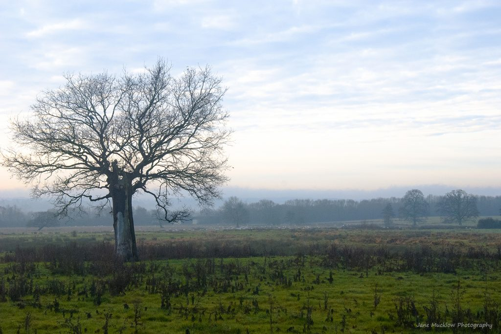 Photograph of a misty Autumnal view across the fields and the lone tree between Otford and Sevenoaks, by Jane Mucklow