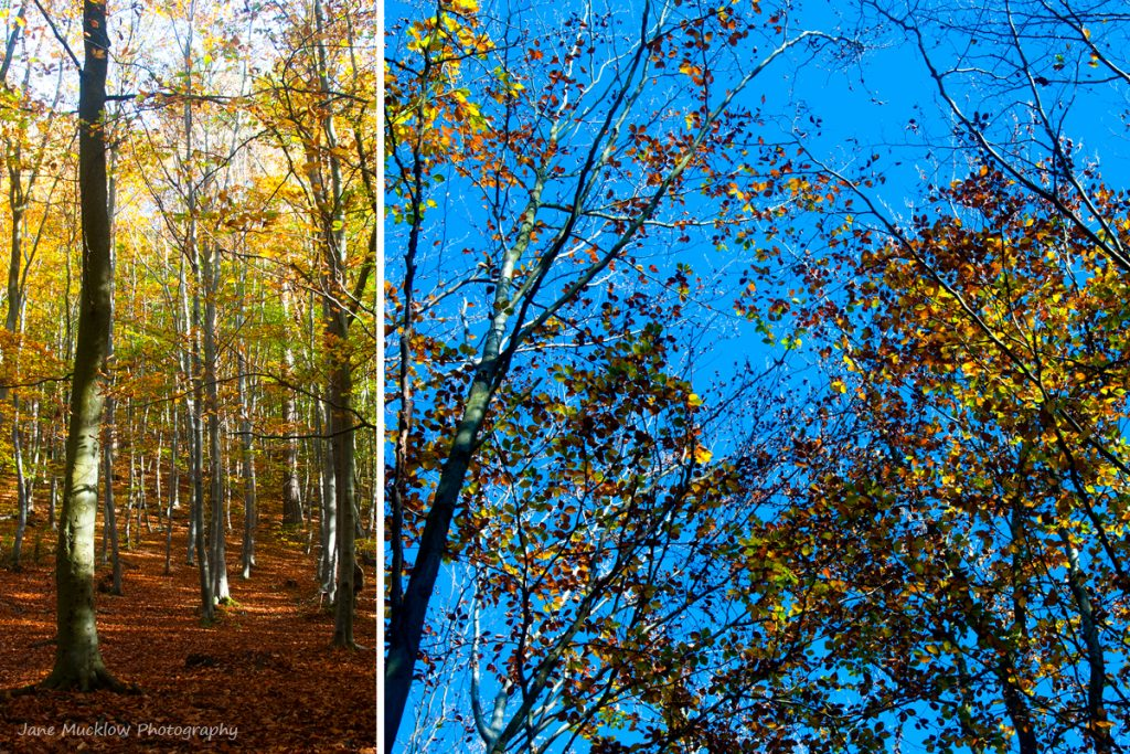 Montage of photographs of Autumn leaves for November in the Colours of Kent 2019 Calendar by Jane Mucklow Photography
