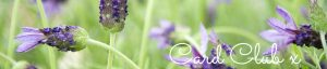 Photo of french lavender by Jane Mucklow, page header for card club