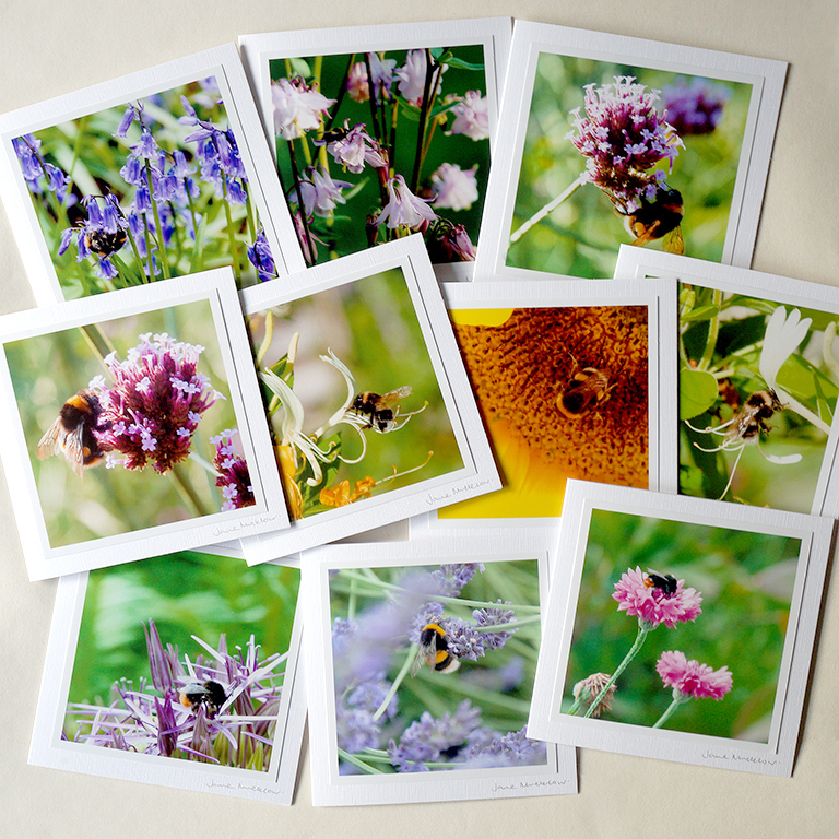 Save the Bees Card Collection - set of ten mixed photographs on greetings cards, by Jane Mucklow