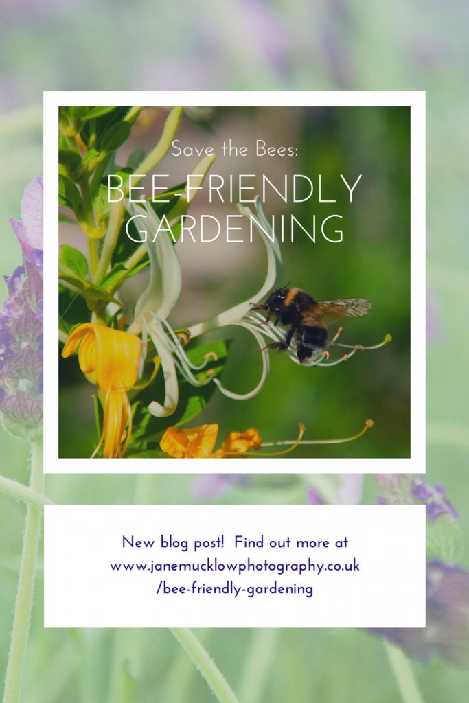 Pinterest post image, photo of a bee and honeysuckle by Jane Mucklow