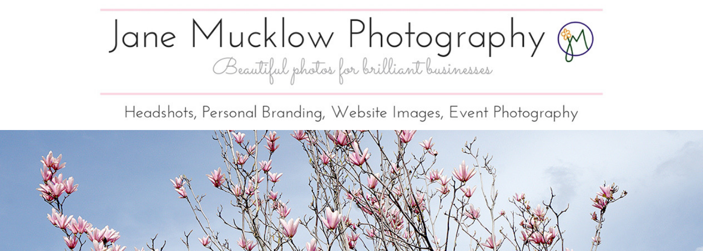 Pink magnolia blossom on blue sky, commercial page banner image by Jane Mucklow