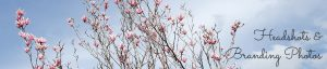 Pink magnolia blossom on blue sky, commercial page header image by Jane Mucklow