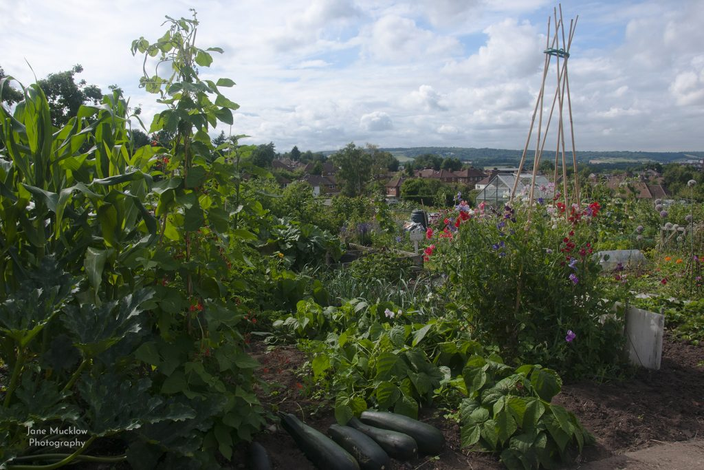 Photograph of the Allotments in Sevenoaks, by Jane Mucklow