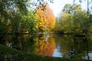 Photograph of Bradbourne Lakes Sevenoaks, by Jane Mucklow