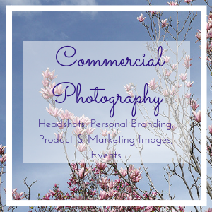 Commercial Photography featured page image, pink magnolia on blue sky photo by Jane Mucklow plus page title