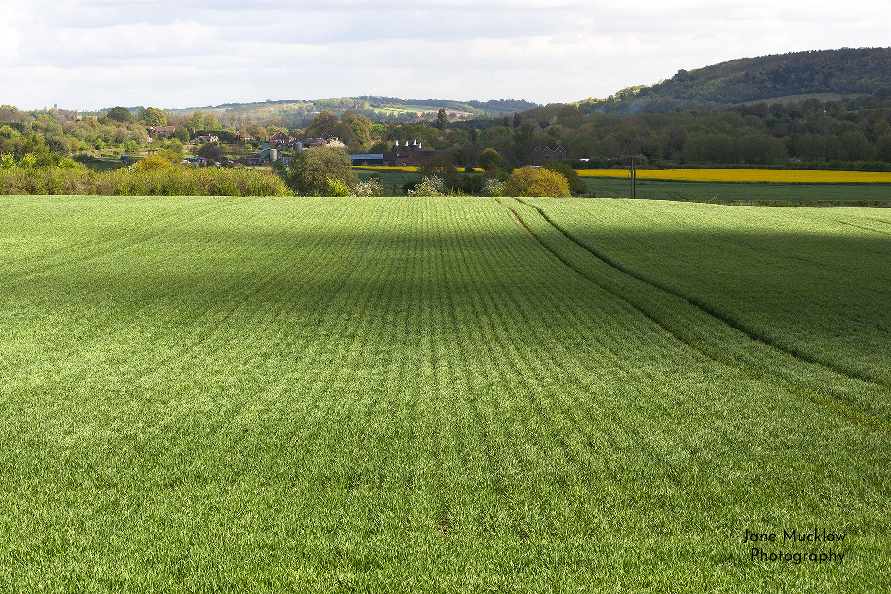 Spring fields view towards Shoreham, photo by Jane Mucklow