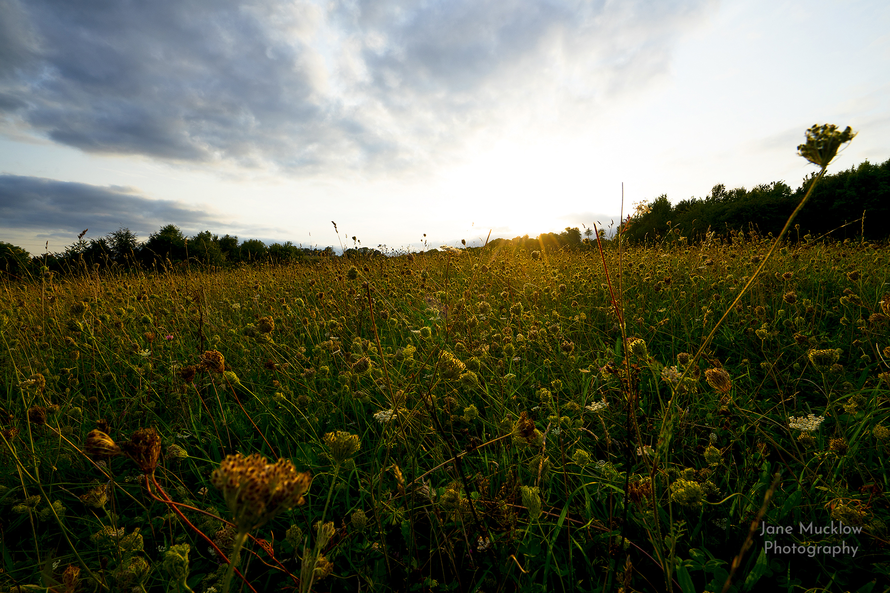 Wildflowers at Lullingstone Country Park, Autumn afternoon sun, photo by Jane Mucklow