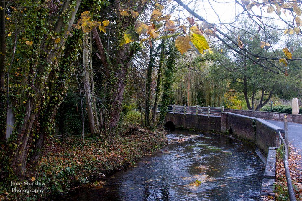 Autumn leaves at Shoreham Bridge, photo by Jane Mucklow