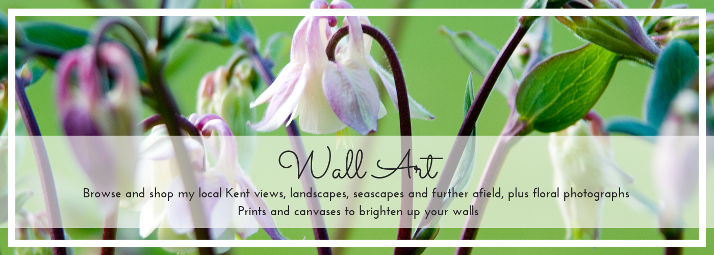 Wall Art gallery and shop banner for home page, aquilegia photo by Jane Mucklow
