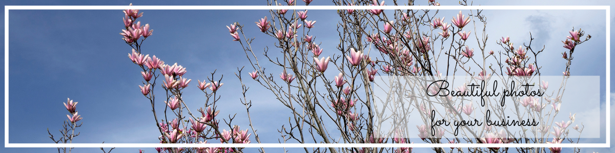 website page banner for commercial photography, magnolia on blue sky photo by Jane Mucklow