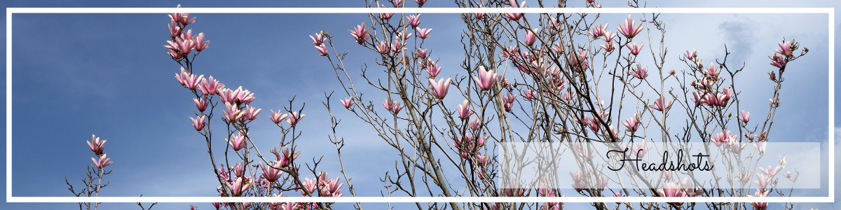 website page banner for headshot photography, magnolia on blue sky photo by Jane Mucklow