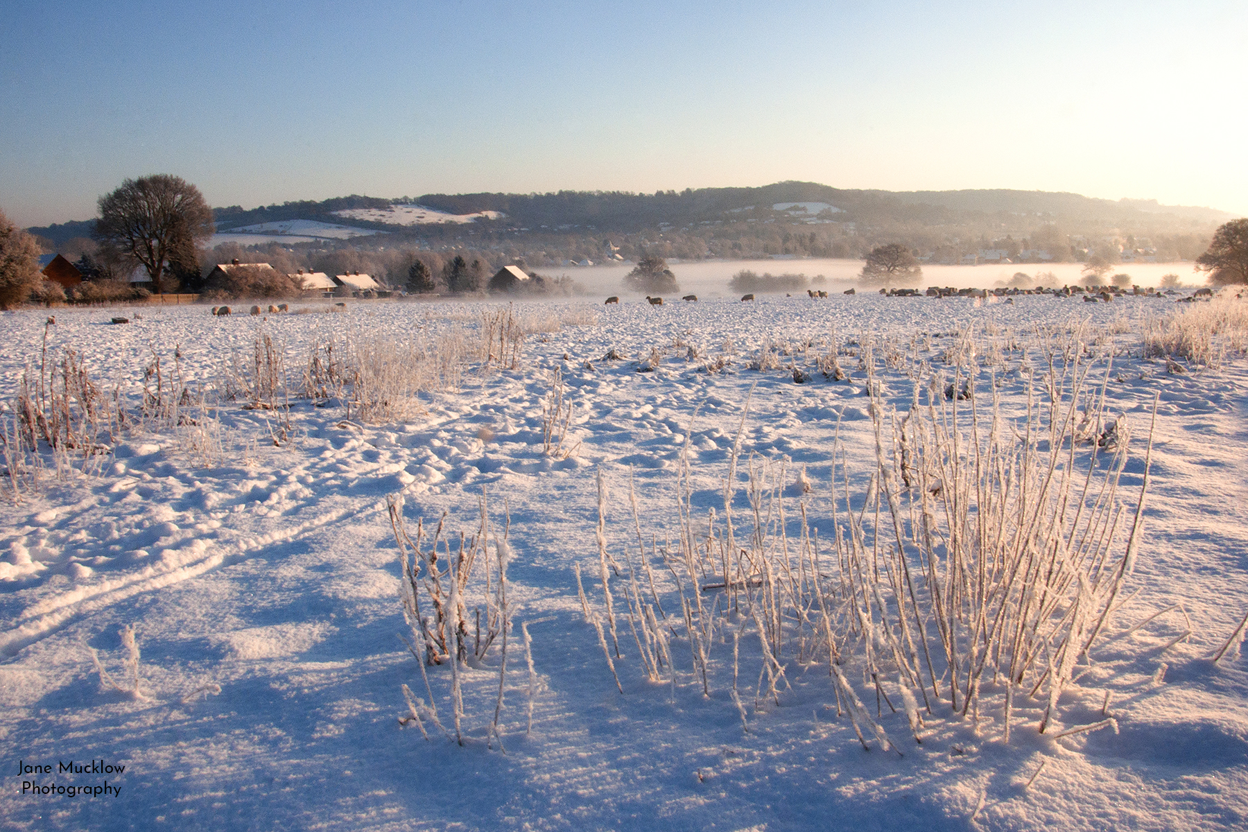 Photograph by Jane Mucklow of a snowy sunrise over a sheep field, the view towards Otford, Kent