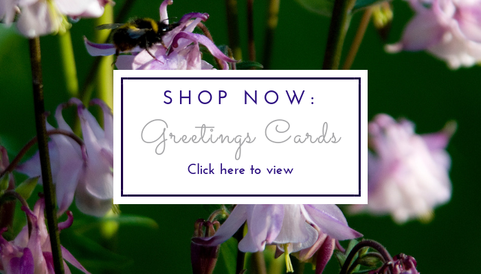Card Shop page link image by Jane Mucklow