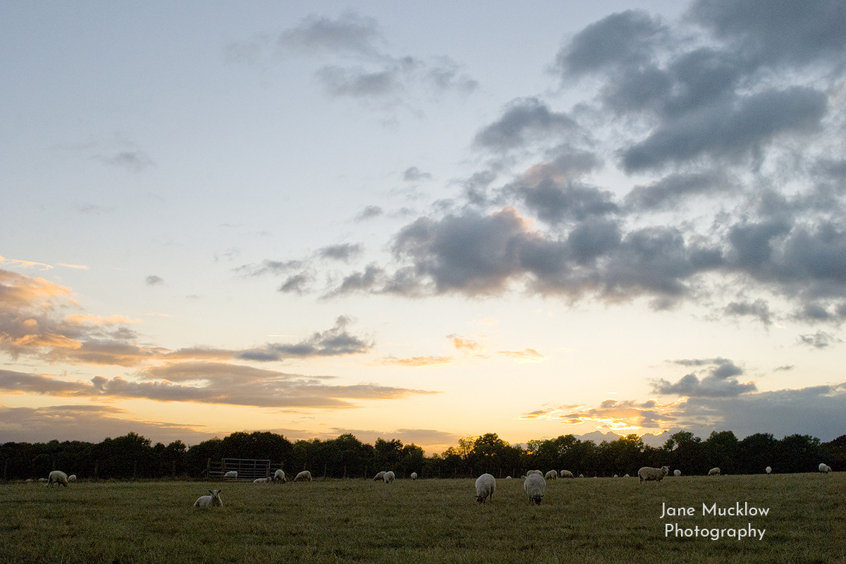 Photo of a sunset over the sheep fields between Sevenoaks and Dunton Green, by Jane Mucklow