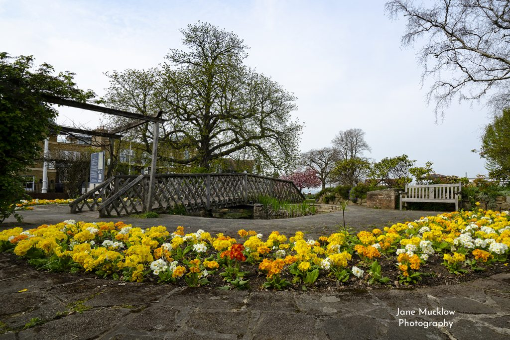 Photo of the Spring flowers at the Vine Gardens, Sevenoaks, by Jane Mucklow