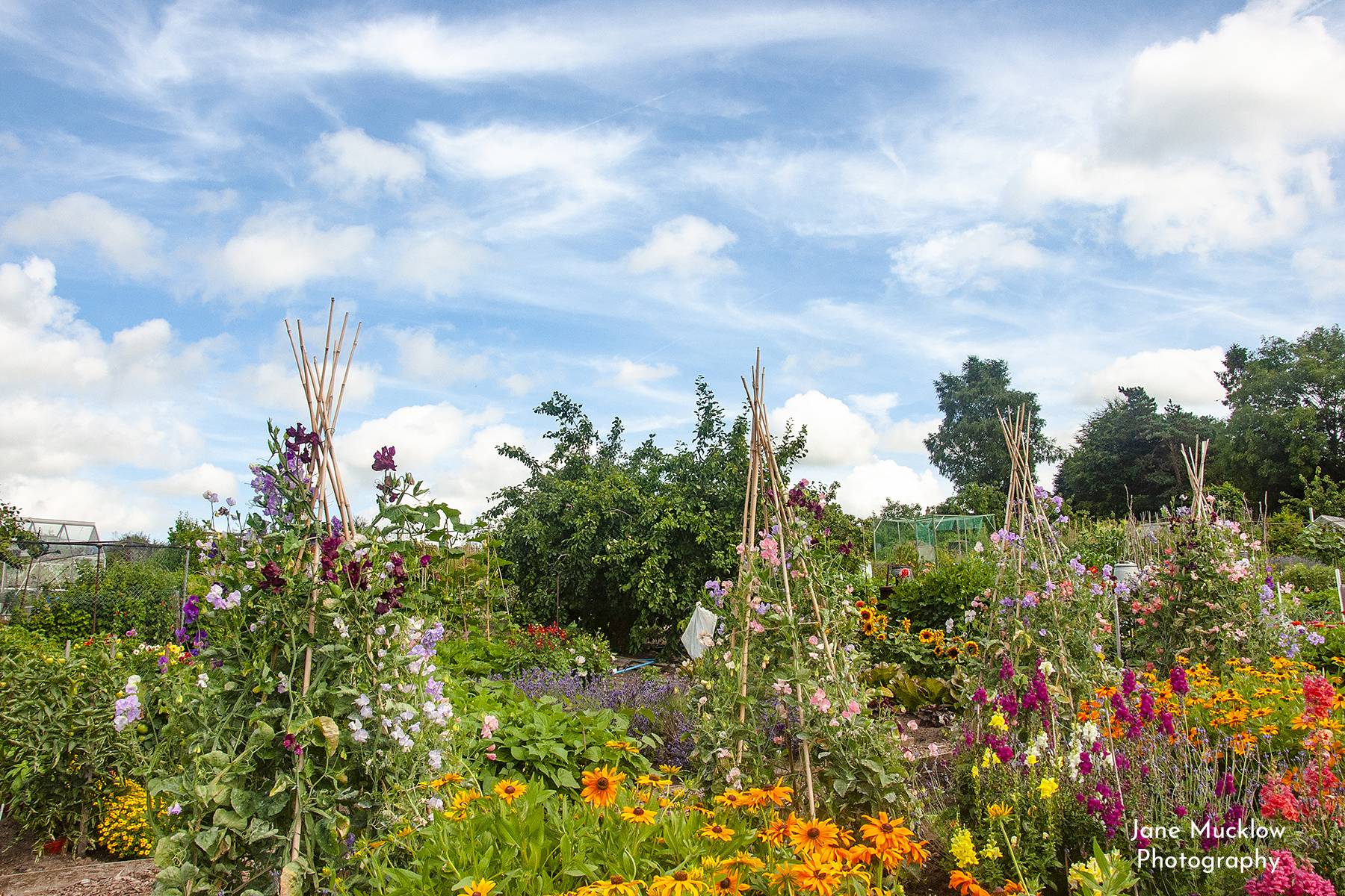 Photo of Sevenoaks Allotments by Jane Mucklow