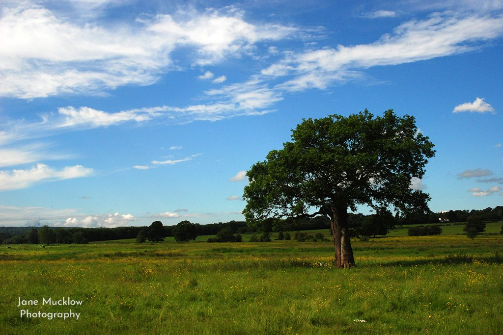 Photo of the Lone Tree view from Otford towards Sevenoaks, by Jane Mucklow