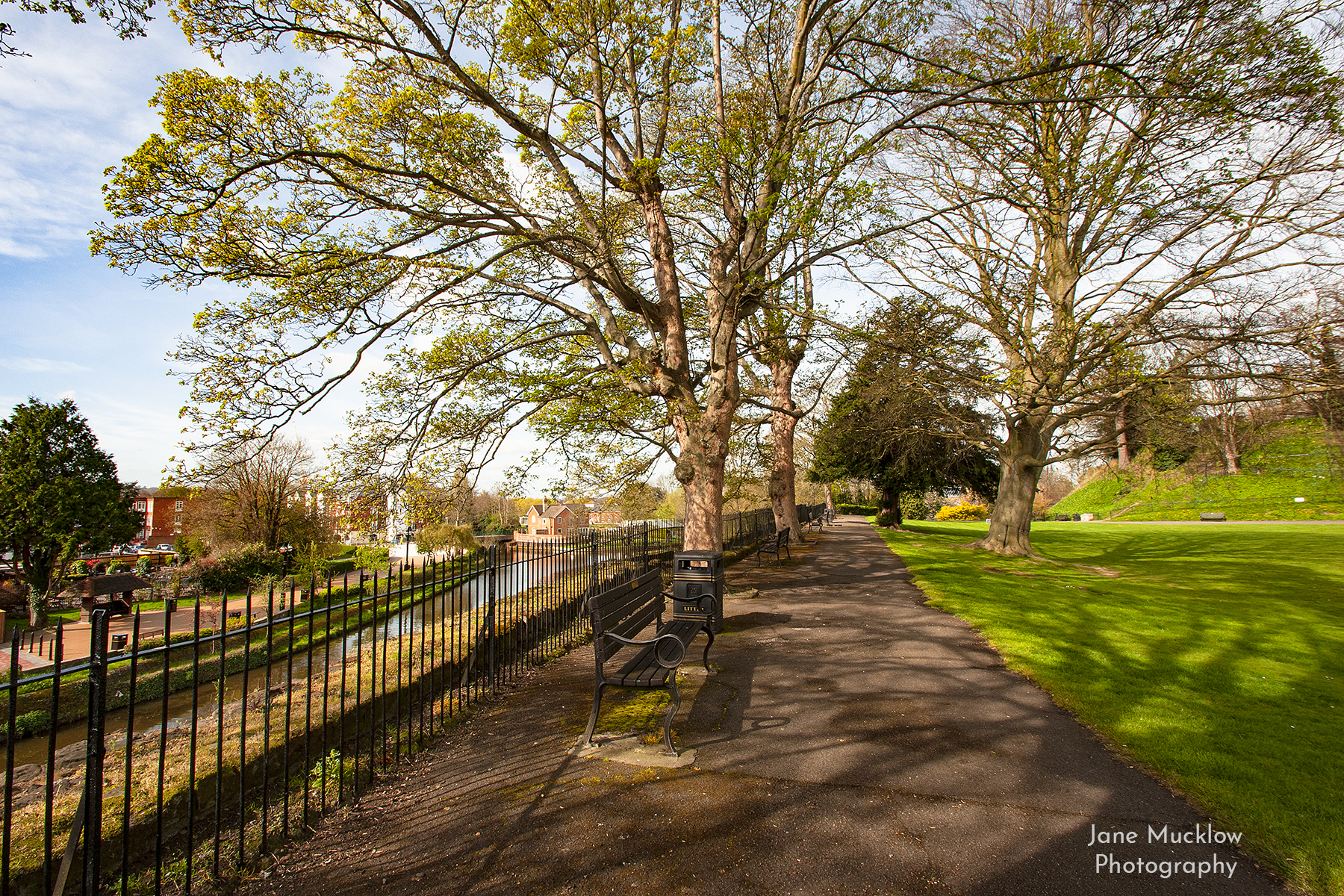 Photo of Spring trees along the castle wall, Tonbridge, by Jane Mucklow